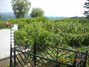 jungla cimitir vulcan1